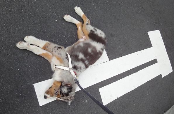 Al7 散歩嫌いの牧羊犬: taxMLの紹介 ~税法と税理士業務の情報~
