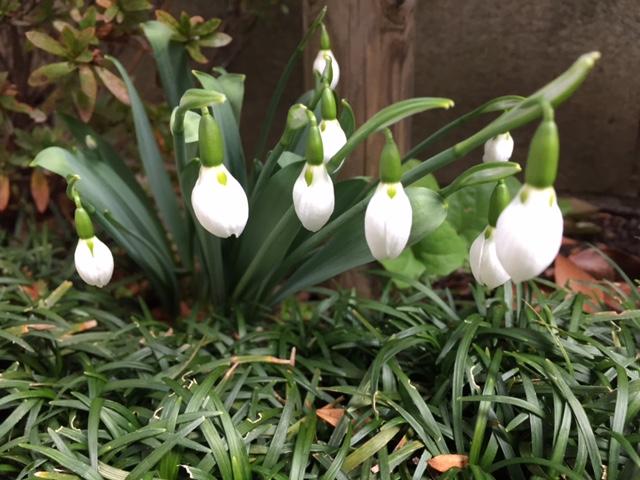 働きもせず、紡ぎもしない。しかし、あなたがたに言うが、栄華をきわめたと時のソロモンでさえ、この花の一つほどにも着飾ってはいなかった。