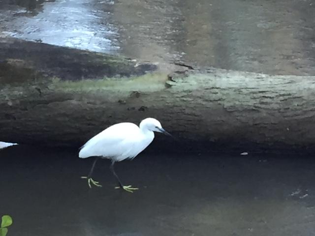 氷の上の白鷺(?)