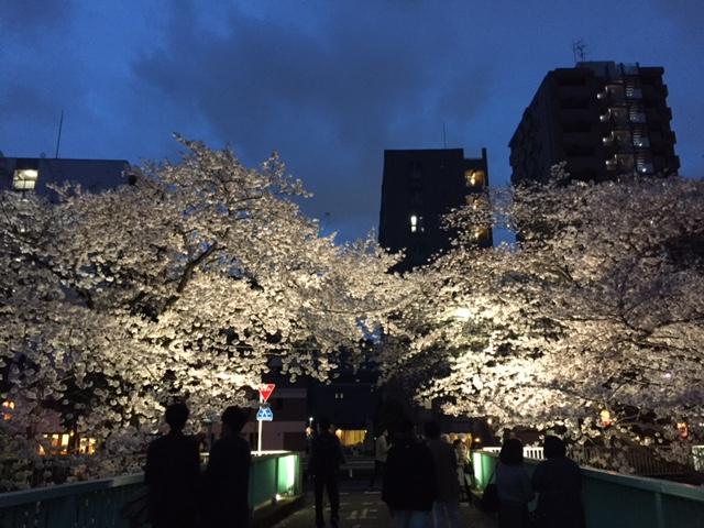 神田川の夜桜