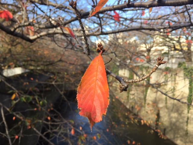神田川の秋