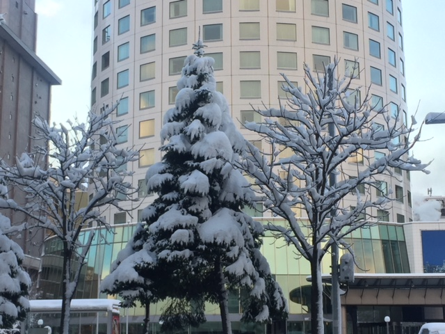 札幌は雪のクリスマスツリー