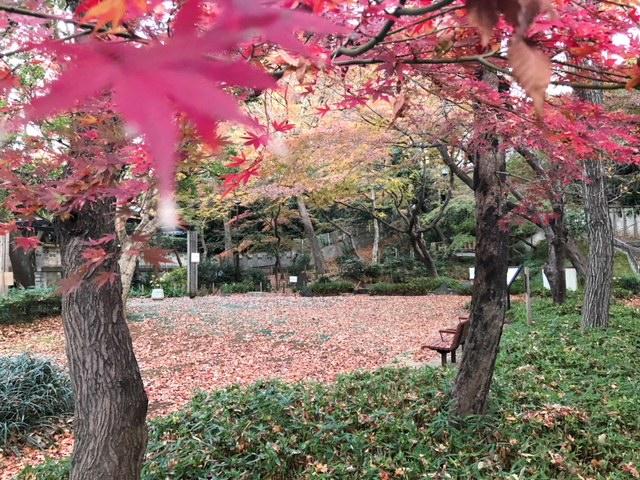 野鳥の森公園の落ち葉