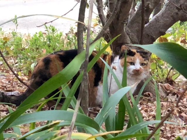 おとめ山の猫