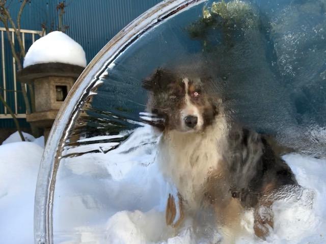 氷と雪とアルベルト
