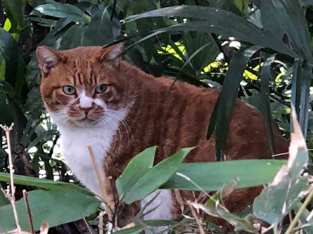 おとめ山のブサイク猫