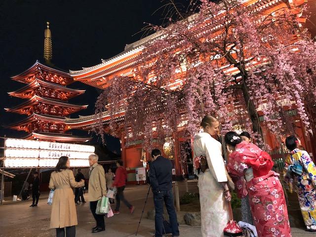 浅草寺のしだれ桜