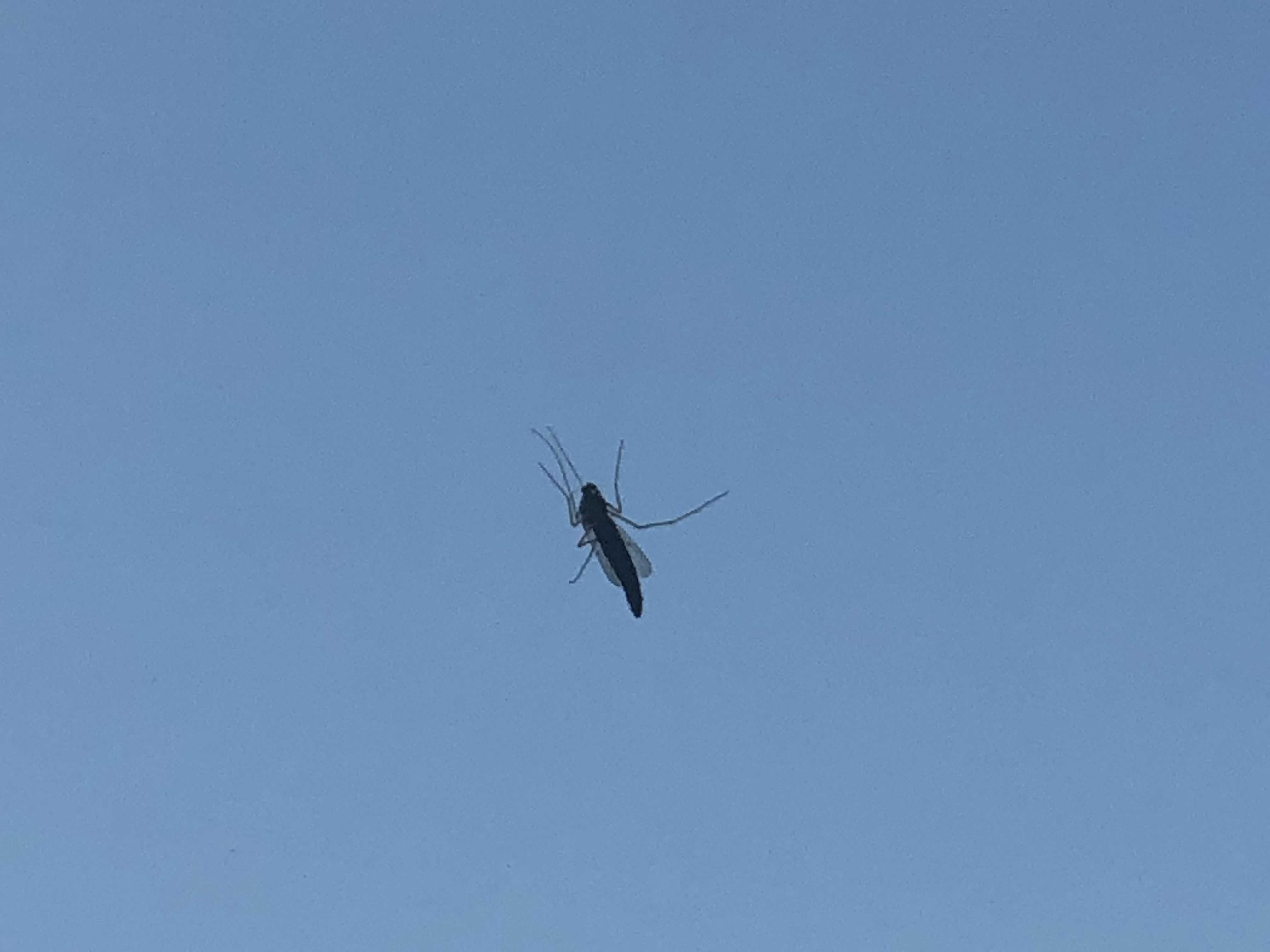 17階の窓まで飛んできた虫