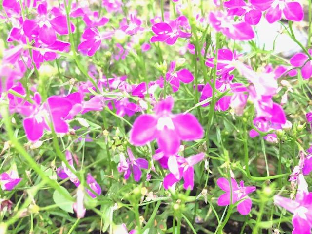 小さな花ほど美しい
