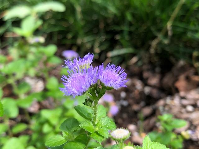 小さい花ほど美しい
