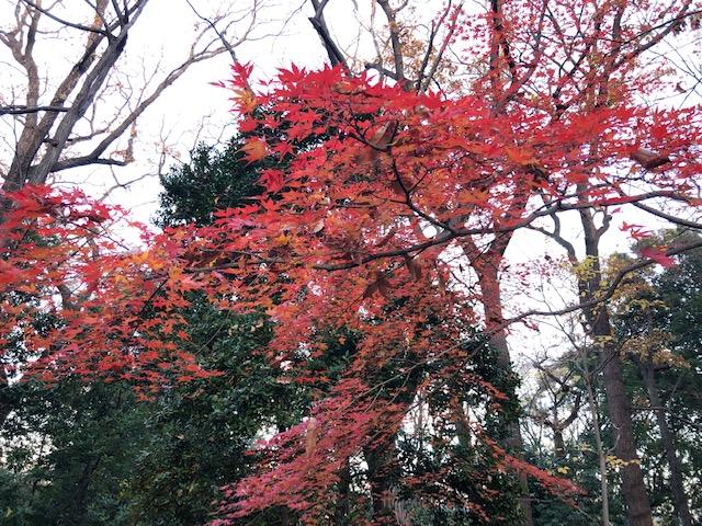 おとめ山の紅葉
